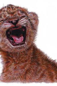 Bilder Löwe Große Katze Jungtiere Gezeichnet Weißer hintergrund Tiere