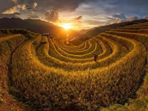 Photo Sunrises and sunsets Fields Vietnam Sun