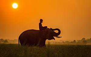 Picture Sunrises and sunsets Elephants Asian Sun Grass Sit Guy Animals