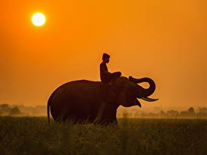 Picture Sunrises and sunsets Elephants Asian Sun Grass Sitting Young man Animals