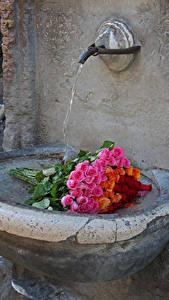Bilder Sträuße Rosen Wasser