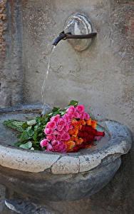 Bilder Sträuße Rosen Wasser Blumen