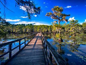Fotos Vereinigte Staaten See Brücken Texas Zaun Caddo Lake Natur