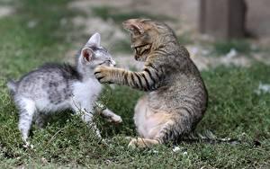 Wallpaper Cats Grass 2 Kittens Paws Animals