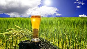 Hintergrundbilder Bier Steine Trinkglas Ähre Lebensmittel