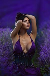 Bilder Lavendel Felder Dekolletee Brust Kleid Schön Mädchens