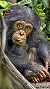 Fondos de Pantalla Mono Cachorros Chimpanzee Animalia
