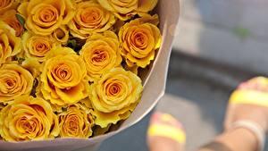 Fotos Rosen Sträuße Gelb Blumen