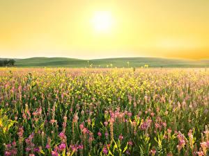 Hintergrundbilder Felder Lavendel Lupinen Sonne