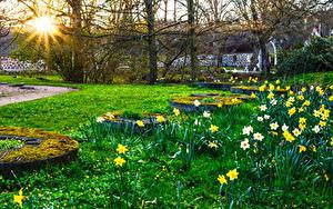 Bilder Park Frühling Narzissen Sonne Gras Laubmoose