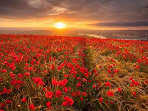 Bilder Landschaftsfotografie Felder Mohn Sonnenaufgänge und Sonnenuntergänge Ähren Blumen