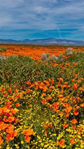 Bilder USA Felder Mohn Gänseblümchen Lancaster Natur
