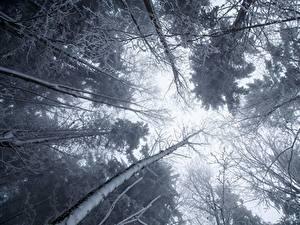 Fotos Bäume Untersicht Ansicht von unten Schnee Ast Natur