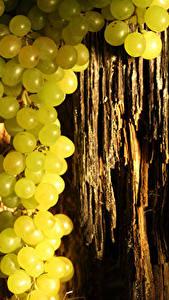Fotos Weintraube Baumstamm Lebensmittel