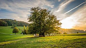Fotos Schweiz Sonnenaufgänge und Sonnenuntergänge Grünland Bäume Linner Linde