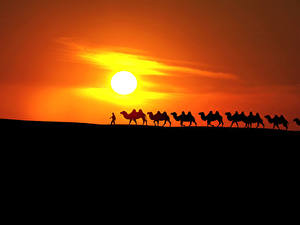 Pictures Sunrises and sunsets Desert Camels Sun Silhouette Nature