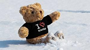 Fotos Teddy Schnee Sitzt Herz Englisches