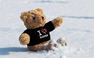 Fotos Teddy Schnee Sitzend Herz Englisch