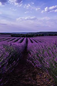 Fotos Spanien Landschaftsfotografie Felder Lavendel Malacuera Natur