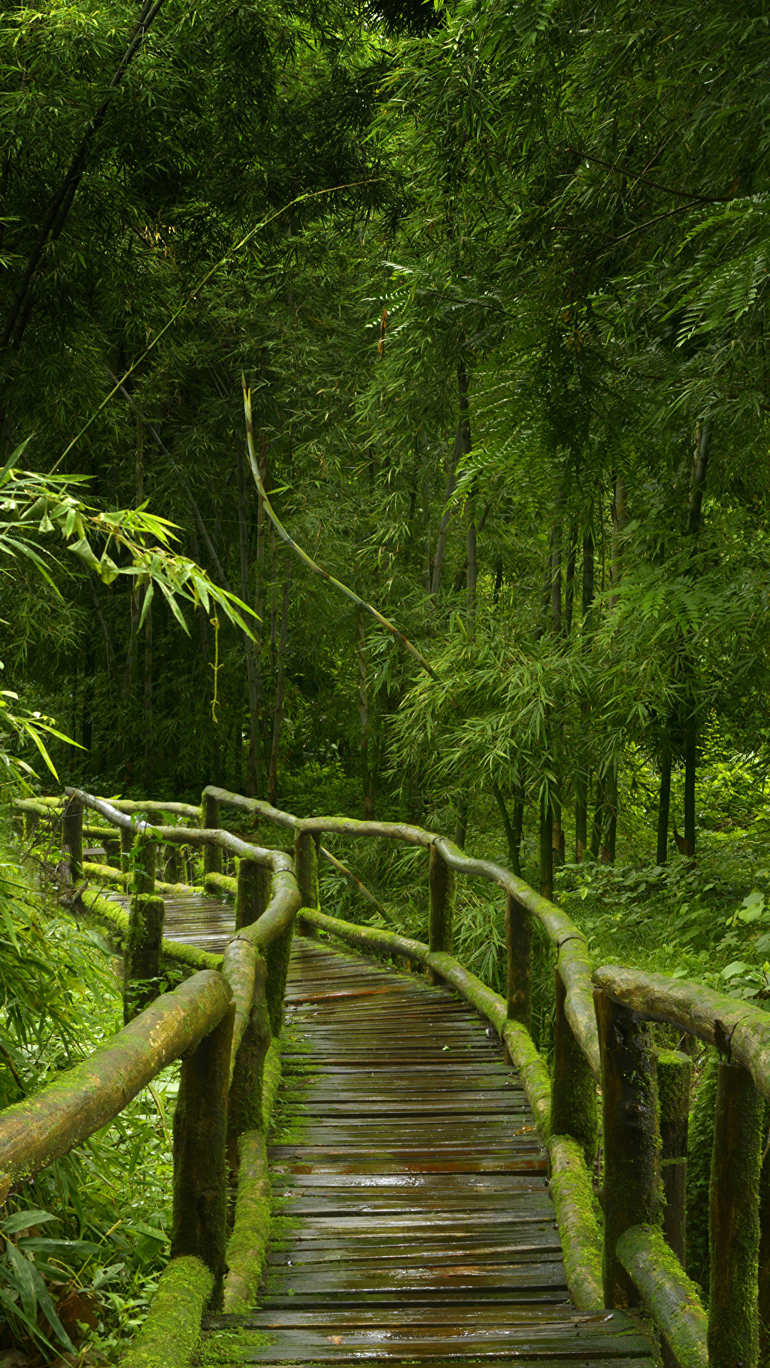 Photos Jungle Nature Bamboo Bridges Forest Tropics Moss