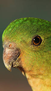 Images Birds Parrots Beak Head Animals