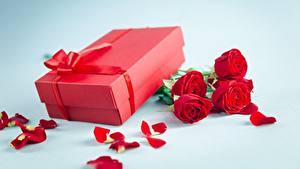 Hintergrundbilder Rosen Valentinstag Geschenke Schachtel Blüte