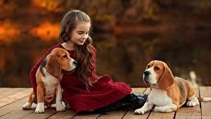 Fotos Hunde Kleine Mädchen Sitzt Beagle Braunhaarige Ekaterina Borisova Kinder Tiere