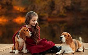 Fotos Hund Kleine Mädchen Sitzt Beagle Braunhaarige Ekaterina Borisova kind Tiere