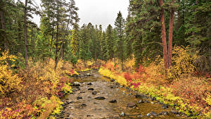 Wallpaper USA Parks Autumn Forests Stones Spruce Streams Flathead National Forest Nature
