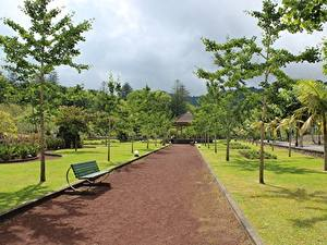 Pictures Parks Portugal Bench Avenue Trees Azores, Furnas