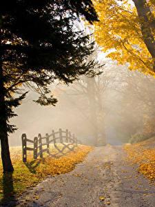 Fotos Herbst Park Wege Bäume Nebel Zaun Natur