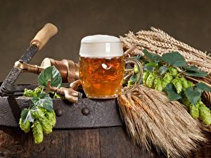 Fotos Bier Echter Hopfen Becher Schaum Ähre Lebensmittel