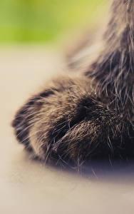 Fotos Katze Großansicht Makrofotografie Pfote ein Tier