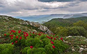 Fotos Russland Krim Landschaftsfotografie Mohn Hügel Strauch