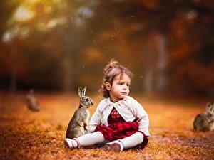 Bilder Kaninchen Kleine Mädchen Sitzen Kinder