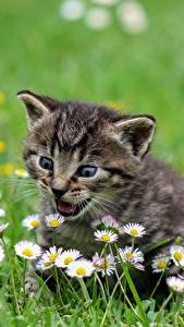 Hintergrundbilder Katze Katzenjunges Gras Nett Tiere