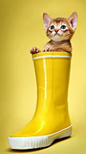 Bilder Katze Farbigen hintergrund Kätzchen Stiefel Blick Gelb
