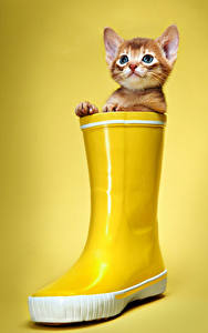 Bilder Katze Farbigen hintergrund Kätzchen Stiefel Blick Gelb Tiere