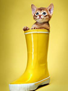 Bilder Katze Farbigen hintergrund Katzenjunges Stiefel Starren Gelb Tiere