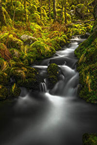 Bilder Norwegen Wasserfall Herbst Steine Laubmoose Rogaland Natur