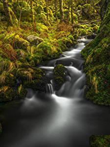 Bilder Norwegen Wasserfall Herbst Stein Laubmoose Rogaland Natur
