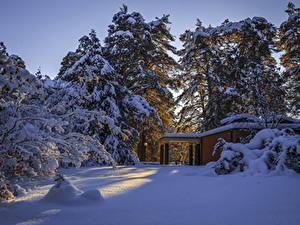 Bilder Schweden Winter Schnee Fichten Natur
