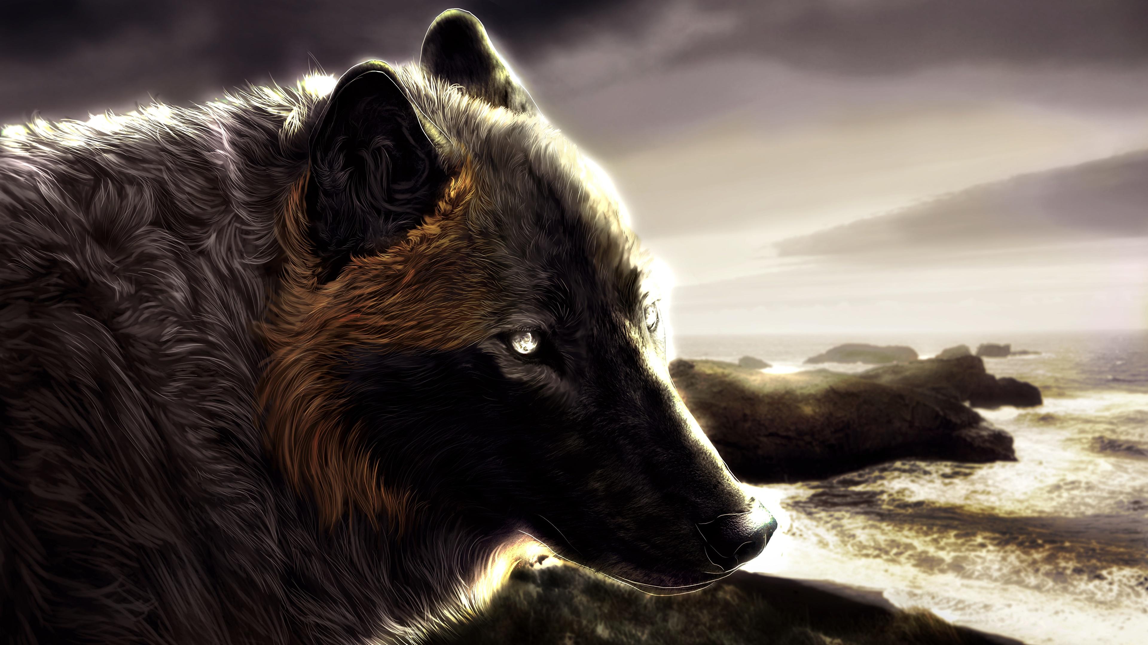 壁紙 3840x2160 狼 绘制壁纸 头 動物 下载 照片