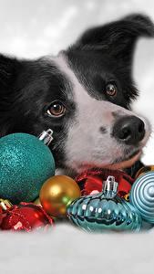 Fotos Neujahr Hunde Kugeln Border Collie Tiere