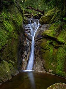 Bilder Australien Park Wasserfall Felsen Laubmoose Bach Paluma National Park Queensland