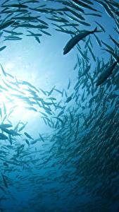 Image Underwater world Fish Many Animals