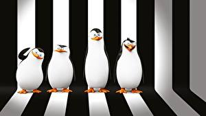 Hintergrundbilder Pinguine Madagascar Strips Penguins of Madagascar 3D-Grafik