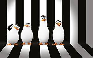 Hintergrundbilder Pinguine Madagascar Strips Penguins of Madagascar 3D-Grafik