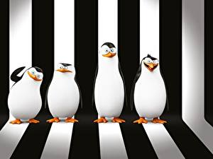 Hintergrundbilder Pinguine Madagascar Strips Penguins of Madagascar Zeichentrickfilm 3D-Grafik