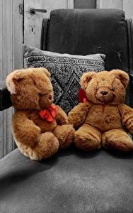Hintergrundbilder Teddy Sessel Zwei